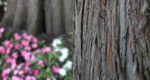 Wald- und Baumbestattungen - Bücken-Brendt Bestattungen seit 1866 in Eschweiler